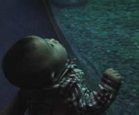 赤ちゃん 水族館
